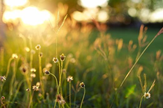 sunshine-1583677_960_720
